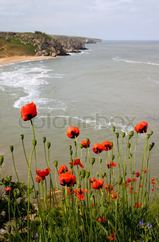 sea of poppies study guide