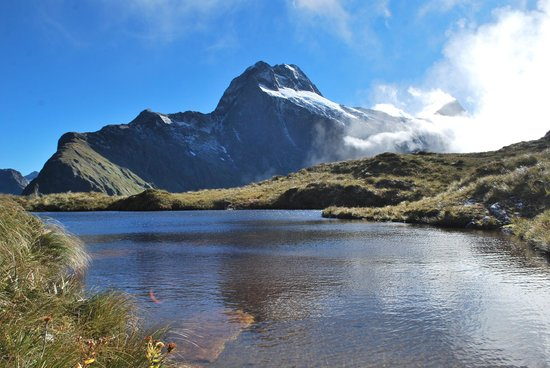 milford track guided walk reviews