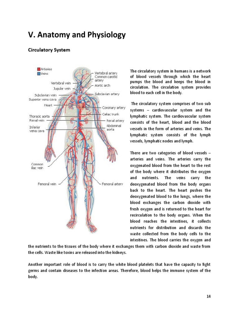 anatomy and physiology chapter 3 study guide