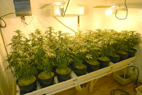 beginners guide to growing weed indoors