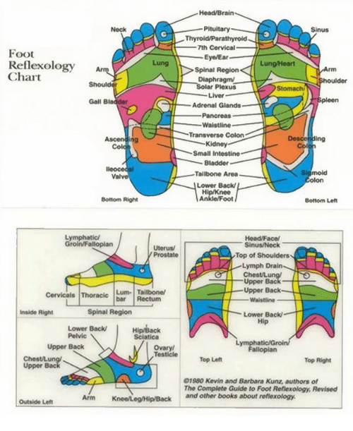 the reflexology handbook a complete guide
